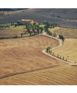 I vini della Val d'Orcia: Montalcino e Montepulciano