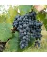 Vini rossi della Toscana